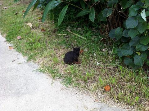 沖縄にゃんズ、昨日の黒にゃんこだ。